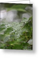Leafy Raindrops Greeting Card