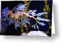 Leafy Sea Dragon - Seahorse Greeting Card