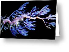 Leafy Sea Dragon Greeting Card by Paulette Thomas
