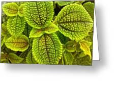 Leafy Greeting Card