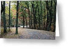 Leafy Trail Greeting Card
