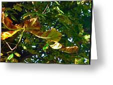 Leafy Tree Image Greeting Card