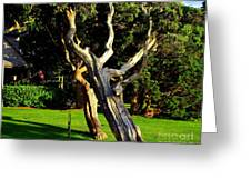Leaning Cedars Of West Chop Greeting Card