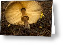 Leaning Fungi Greeting Card