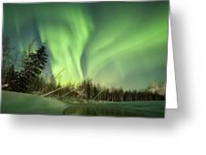 Leaning Spruce  Greeting Card