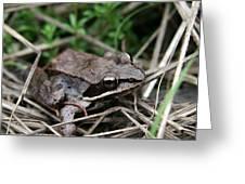 Wood Frog  Greeting Card