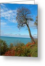 Leaning Tree Over Lake Greeting Card