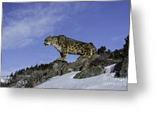 Leapard Look Out Greeting Card