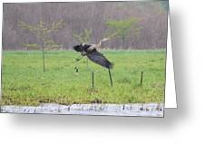 Leaping Flight Greeting Card