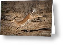 Leaping Impala Greeting Card