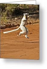 Leaping Lemur Greeting Card