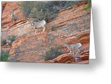 Learning How To Rock Climb Zion Greeting Card