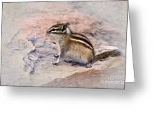 Least Chipmunk #2 Greeting Card