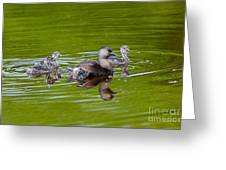 Least Grebe And Young Greeting Card