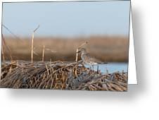 Least Sandpiper Morning Greeting Card