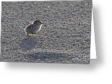 Least Tern Chick Greeting Card