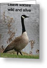 Leave Wildlife Wild And Alive Greeting Card