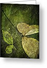 Leaves Afloat Greeting Card
