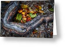 Leaves And Root Greeting Card