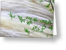 Leaves And Rushing Water Greeting Card