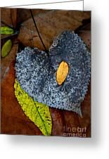 Leaves At Oak Openings Greeting Card