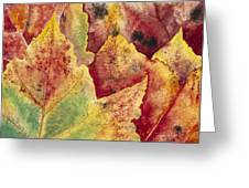 Leaves - Autumn Greeting Card