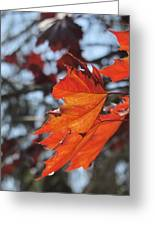 Leaves Backlit 3 Greeting Card