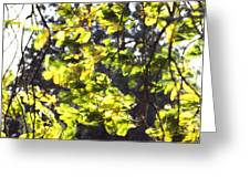 Leaves Blowing Greeting Card