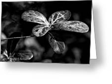 Leaves - Bw Greeting Card