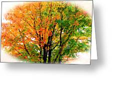 Leaves Changing Colors Greeting Card