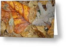 Leaves Greeting Card by Glenn Calloway