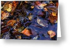 Leaves In A Puddle Greeting Card