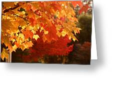 Fall Leaves In Afternoon Sun Greeting Card