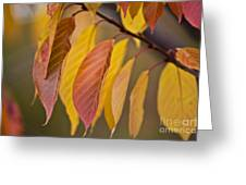 Leaves In Fall Greeting Card