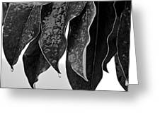 Leaves In Ice Greeting Card