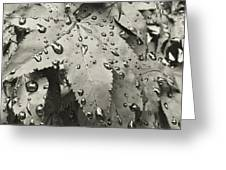 Leaves In Rain Greeting Card