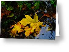 Leaves In Still Shallows Greeting Card