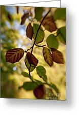 Leaves In The Breeze Greeting Card