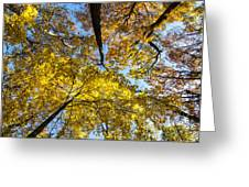 Leaves In The Sky Greeting Card