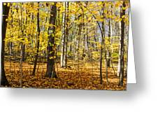 Leaves In The Woods Greeting Card
