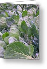 Leaves Of Green Greeting Card