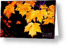 Leaves Of Maple Greeting Card