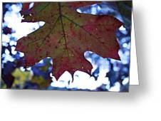 Leaves Of Red Greeting Card