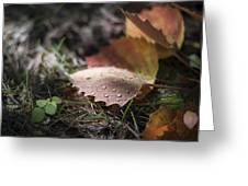 Leaves Of The Aspen Greeting Card