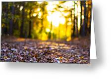 Leaves On A Forest Trail Greeting Card by Parker Cunningham