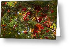 Leaves On Evergreen Greeting Card
