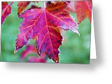 Leaves On Fire Greeting Card