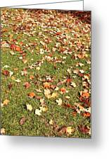 Leaves On Grass Greeting Card