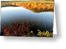 Leaves On The Lake Greeting Card