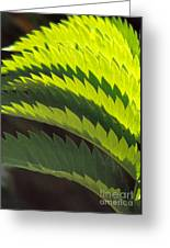 Leaves Patterns Greeting Card